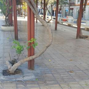 Ciudadanos reclama un mayor mantenimiento y cuidado de la Avenida de la Libertad