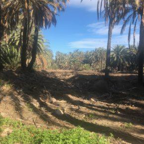 """Juan Antonio Sempere denuncia el estado """"lamentable y de abandono"""" que ofrece la Ruta del Palmeral a los turistas"""
